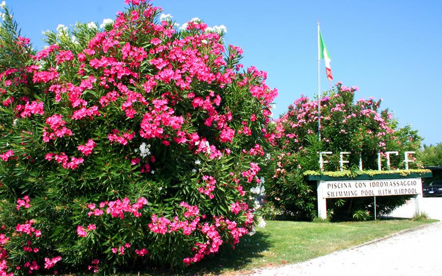 Hotel  Stelle Marina Di Pietrasanta